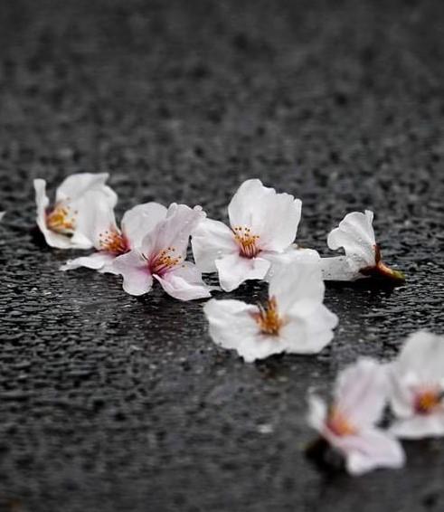 春も過ぎ・・・。新しい結婚式のカタチ~花yomego~